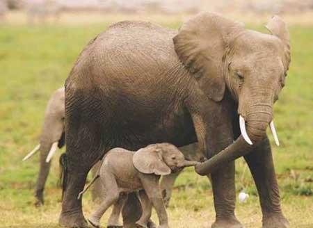 تصاویر دیدنی,فیل ,تصاویر جالب