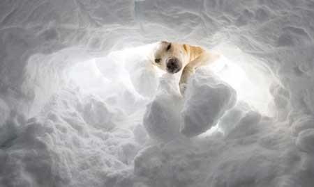 عکسهای جالب, خرس قطبی,تصاویر جالب