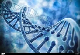 کشف جدید دانشمندان: برخی مردها، ژنتیک، متجاوزند