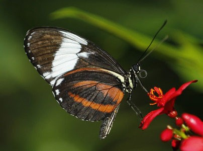 اخبار,اخبار گوناگون,پروانههای زیبا