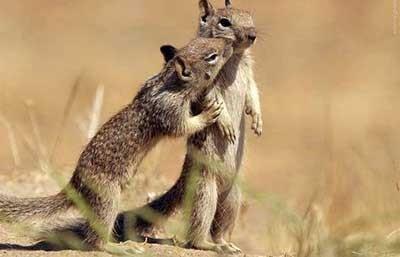 اخبار,اخبار گوناگون,عید دیدنی حیوانات