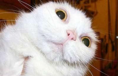 اخبار,اخبارگوناگون,چهره حیوانات درحالت تعجب