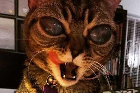 اخبار,اخبار گوناگون ,گربه ای با چشم های متفاوت