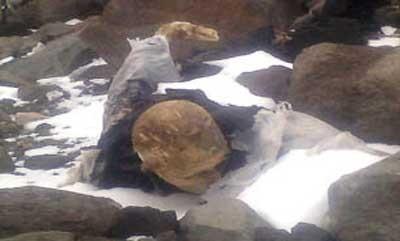 اخبار,اخبار علمی ,اجساد مومیایی شده