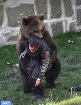 اخبار,اخبارحوادث,جدال کوهنورد خرمآبادی با خرس قهوهای
