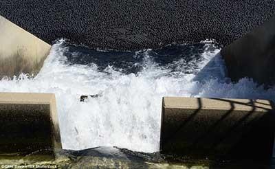 اخبار,اخبارگوناگون,جلوگیری  از تبخیر شدن آب
