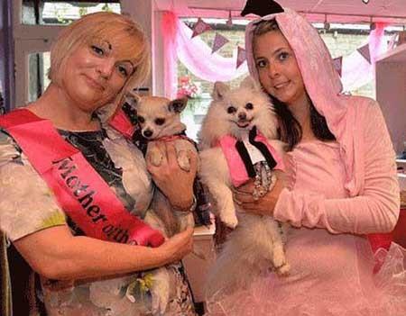 مراسم ازدواج پر سر و صدای دو سگ پولدار