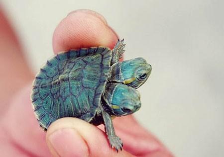 اخبار,اخبار گوناگون ,لاکپشت عجیبالخلقه