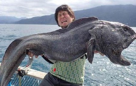 اخبار,اخبار گوناگون,صید وحشتناک ماهی گیر ژاپنی
