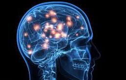اخبار,اخبار علمی ,مغز