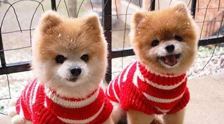 اخبار,اخبار گوناگون,تصاویری جالب از حیوانات دوقلو