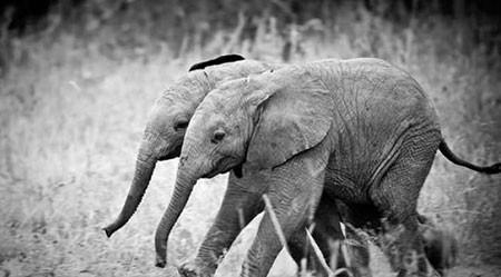 اخبار,اخبار گوناگون,تصاویری جالب از حیوانات 2قلو