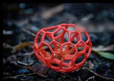 عجیب ترین قارچ سمی جهان + عکس