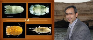 کشف و ثبت جهانی چهار گونه جانوری جدید در خلیج فارس و دریای عمان