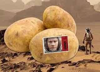 اخبار,اخبارعلمی , کشت سیب زمینی