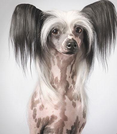 اخبار,اخبار گوناگون,عجیب ترین سگ های دنیا