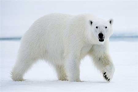 کشنده ترین حیوانات جهان را بشناسید