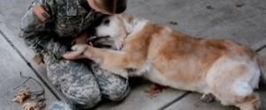 اخبارگوناگون ,خبرهای  گوناگون, دیدار یک سرباز با سگش