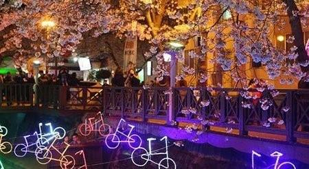 تصاویر دیدنی,جشنواره شکوفه های گیلاس,تصاویر جالب