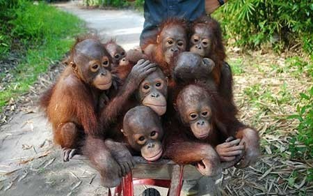 عکسهای جالب,اورانگوتان,تصاویر دیدنی