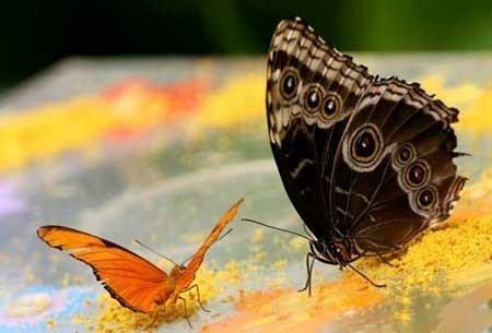 عکسهای جالب,پروانه ,تصاویر دیدنی