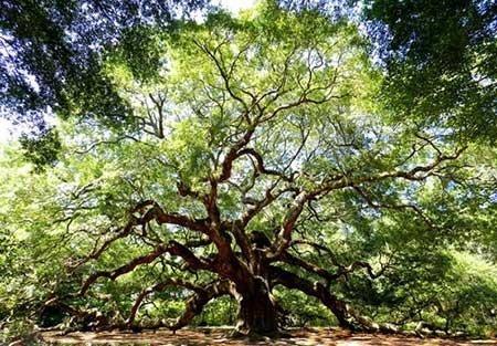 عکسهای جالب,درخت بلوط ,تصاویر دیدنی