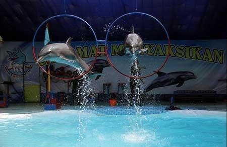 عکسهای جالب,دلفین ها ,تصاویر جالب