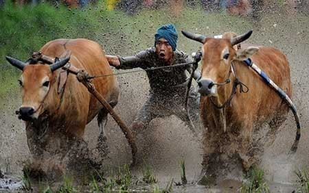 عکسهای جالب,مسابقات سنتی گاورانی,تصاویر جالب