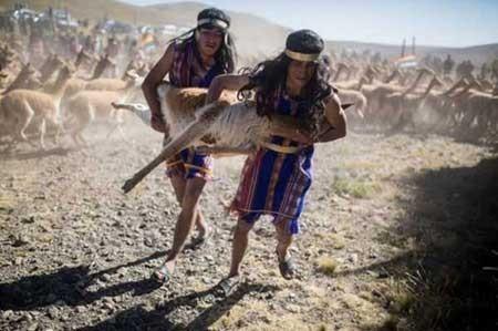 عکسهای جالب,تصاویر دیدنی,حیوانات در حال انقراض