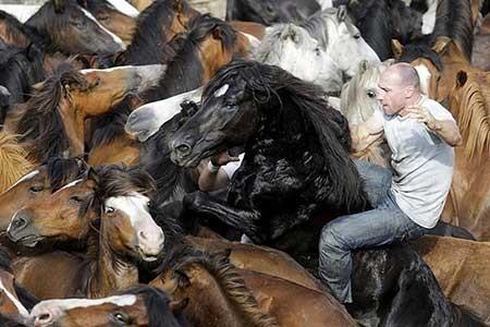 عکسهای جذاب,تصاویر دیدنی,اسب های وحشی