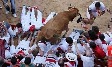 عکسهای جالب,تصاویر جالب,گاو وحشی