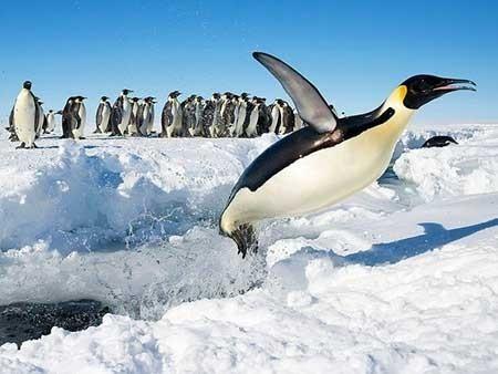 عکسهای جذاب,تصاویر دیدنی,بازی پنگوئن ها