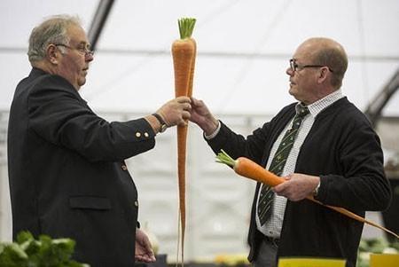عکسهای جالب,تصاویر جالب,نمایشگاه سالانه گل و محصولات کشاورزی