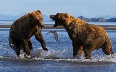 عکسهای جذاب,تصاویر جالب,خرس