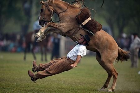 تصاویر دیدنی,تصاویر جالب,اسب سواری