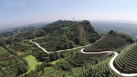 عکسهای جالب,عکسهای جذاب,مزارع چای