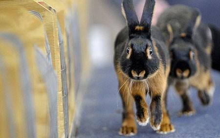 تصاویر دیدنی,تصاویر جالب,خرگوش