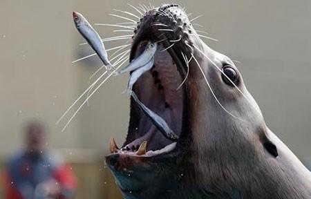عکسهای جالب,تصاویر دیدنی,شیر دریایی