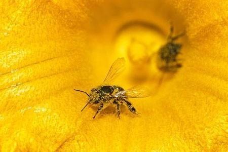 عکسهای جالب,تصاویر جالب,زنبور عسل