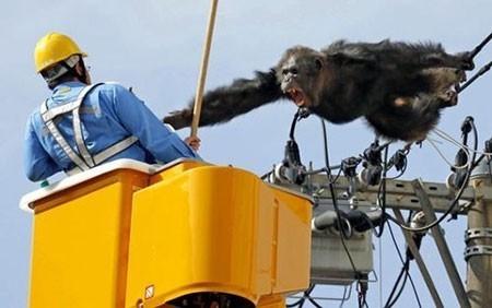 عکسهای جالب,تصاویر دیدنی,حیوانات باغ وحش