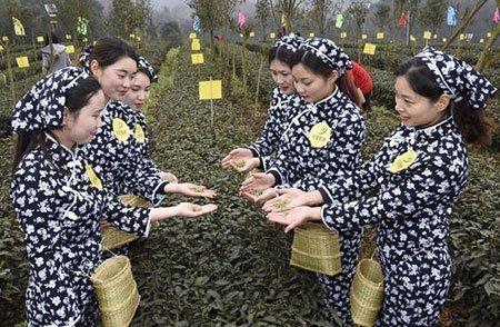 عکسهای جالب,تصاویر دیدنی,جشنواره چای بهاره