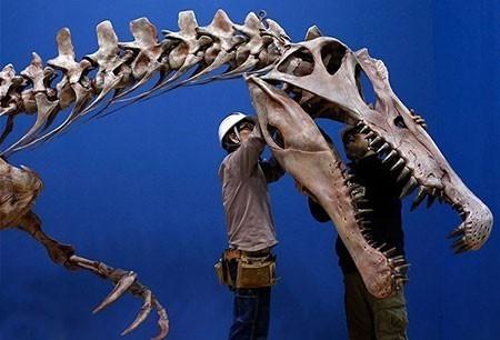 عکسهای جالب,تصاویر جالب,دایناسور