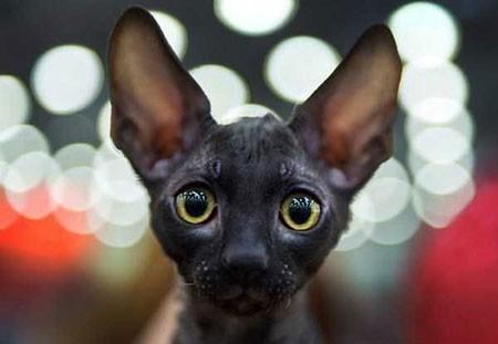 عکسهای جالب,عکسهای جذاب,جشنواره گربه ها