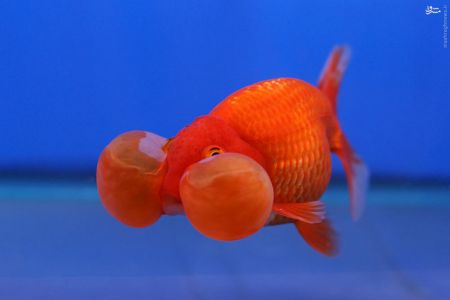 اخبارگوناگون,خبرهای گوناگون,ماهی