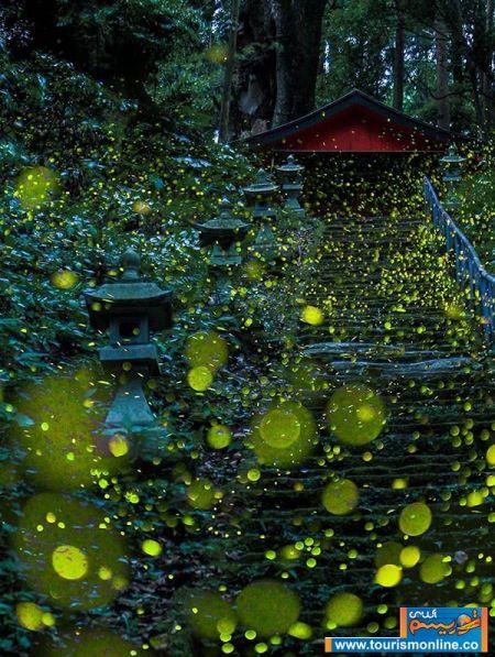 اخبارگوناگون,خبرهای گوناگون,جنگلهای ژاپن