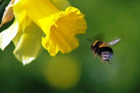 اخبارعلمی,خبرهای علمی,زنبور