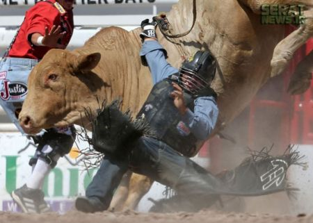 اخبارگوناگون,خبرهای گوناگون,اسبها و گاوهای وحشی