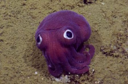 اخبارعلمی,خبرهای علمی,ماهی مرکب
