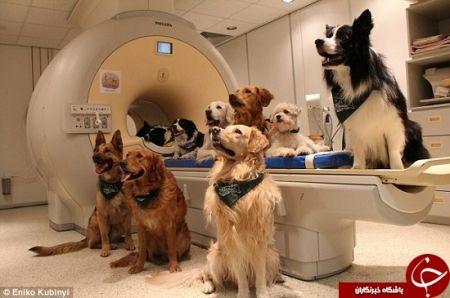 اخبارعلمی,خبرهای علمی,سگ