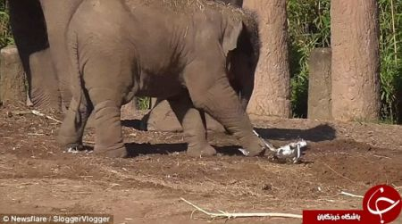 اخبارگوناگون,خبرهای گوناگون,فیل